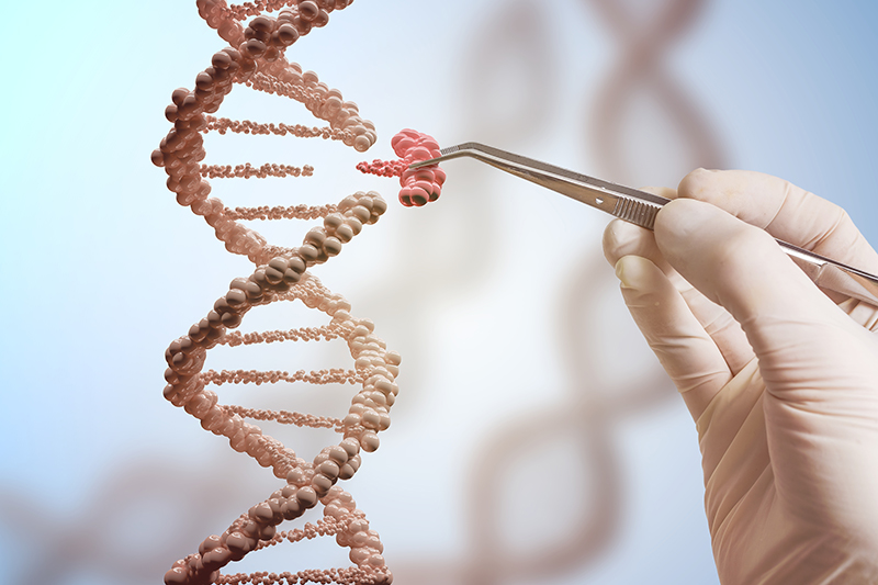 Genetic engineering and gene manipulation concept. A hand is replacing part of a DNA molecule. 3D rendered illustration of DNA. Image via Shutterstock